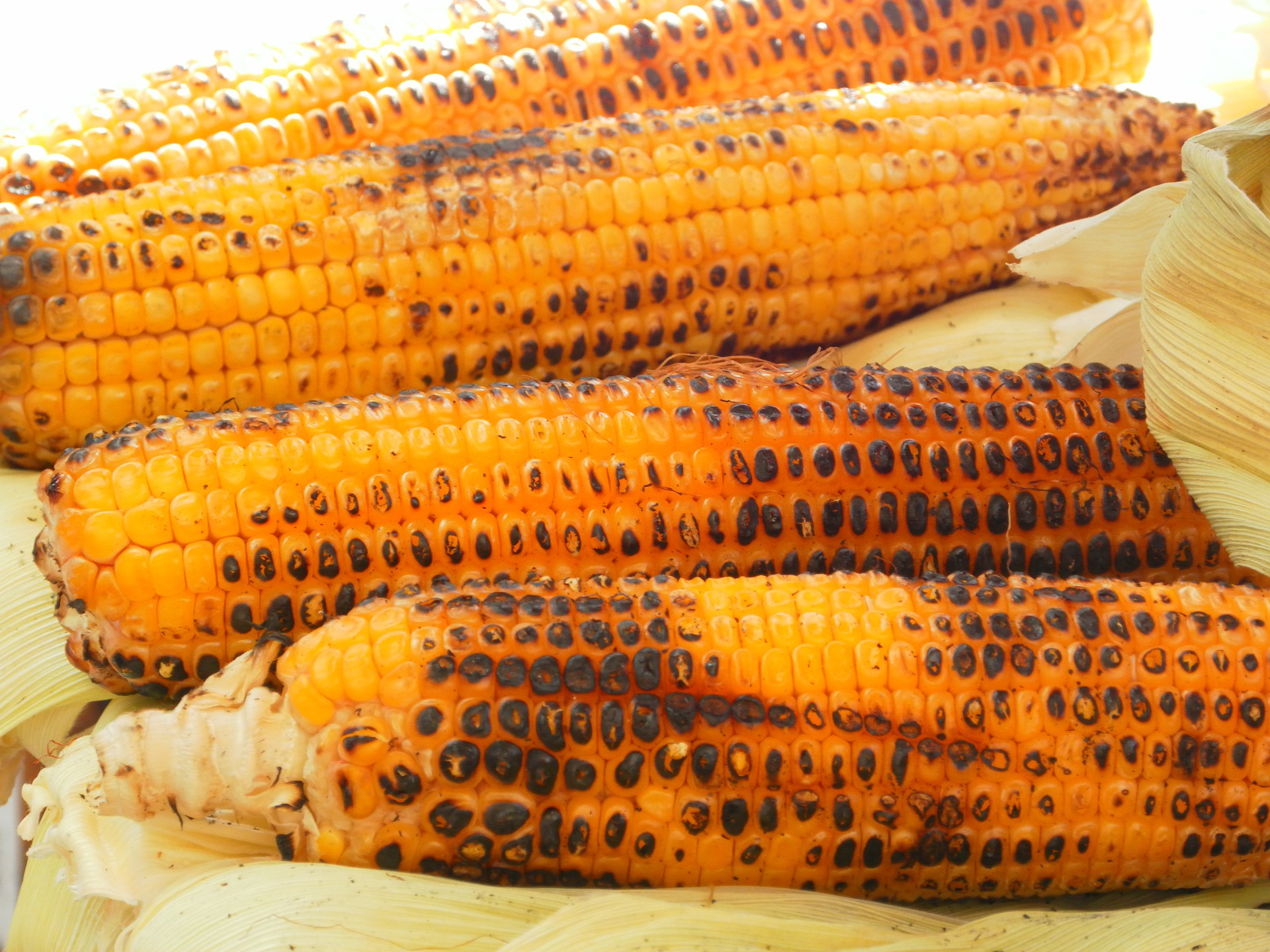 Ways to Cook Fresh Corn on the Cob